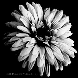 White-Flower-DB-2015-2