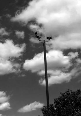 crow-on-pole