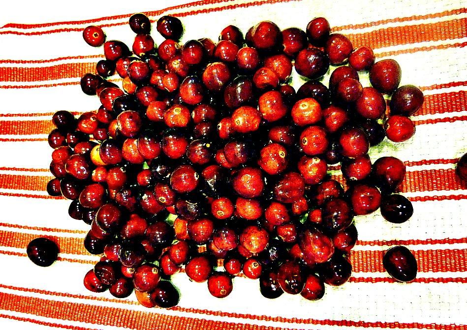 raw cranberries 949 x 672