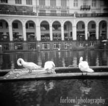 Swans near the town hall (Rathaus) building. Camera: Holga 120N Film: Kodak Tri-X