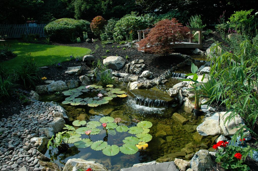 3d Koi Pond Live Wallpaper Rainwater Harvesting Because Open Space Is A Terrible