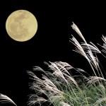 【お月見】2016年の中秋の名月はいつ? お供えものは何がいいの?