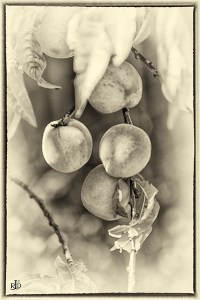monochrome of the Day: Fruit Bowl of New Zealand ...