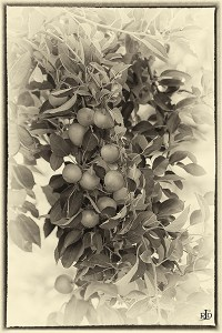 monochrome of the Day: Fruit Bowl of New Zealand 2 ...