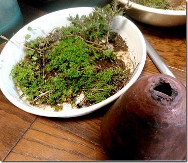幻想テラリウム構想中植物3