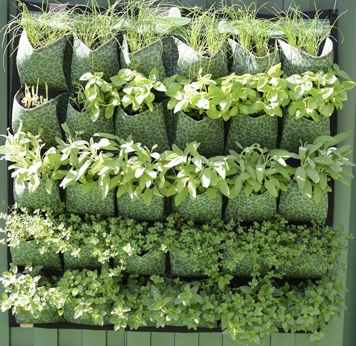 jardin vertical casero jardines verticales caseros aprende a dise arlos y mantenerlos originales ideas 👍4 Ideas de Mejores Modelos de Jardines Verticales Caseros Deco Hogar - Jardin  Vertical Casero