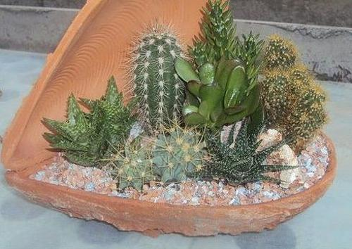 Modern Kitchen Designs For Small Spaces Home Decorating With Cacti And Handmade Cactus Home