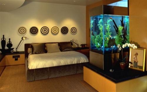 acuario-casa-10
