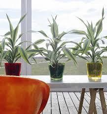 Consejos para usar plantas dentro de casa.