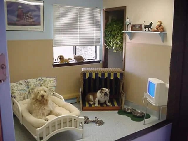 Unique and Stylish Pet Room Ideas - Decoration Channel - dog bedroom ideas