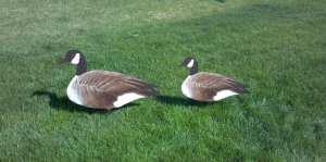 Silhouette Goose Decoy