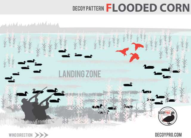 Duck Hunting Flooded Corn: How to Duck Hunt in Flooded Corn Decoy Spread