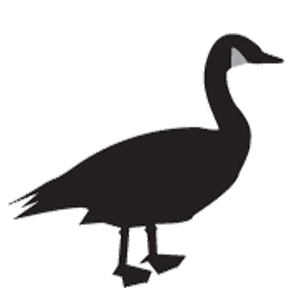 Upright Field Canada Goose Decoy - Canada goose hunting tips