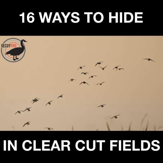 16 WAYS TO HIDE IN CLEAR CUT FIELDS