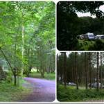 Summer Holidays 2013 – Day 13 – Fineshade Woods