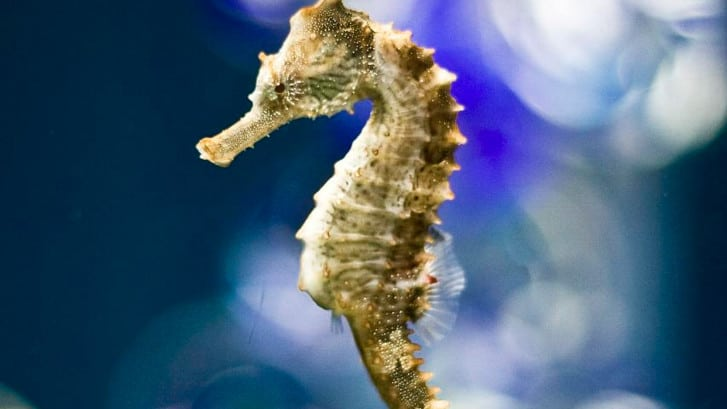 Seahorse Hd Wallpaper 18 Animals In The Coral Reef Characteristics