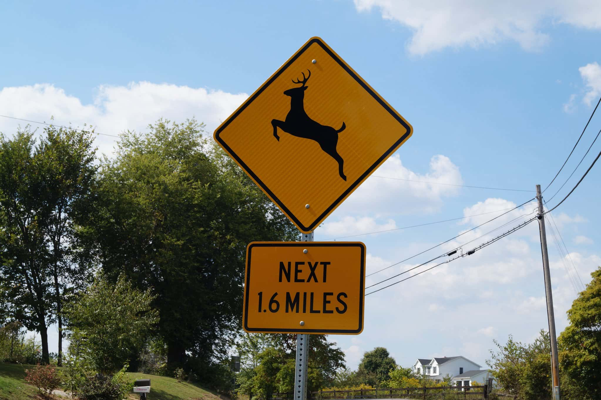 Kytc Warning Drivers About Deer Related Accidents Wkdz Radio
