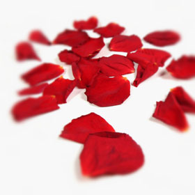 Falling Rose Petals Wallpaper How To Get Into The Good Books Dehouche
