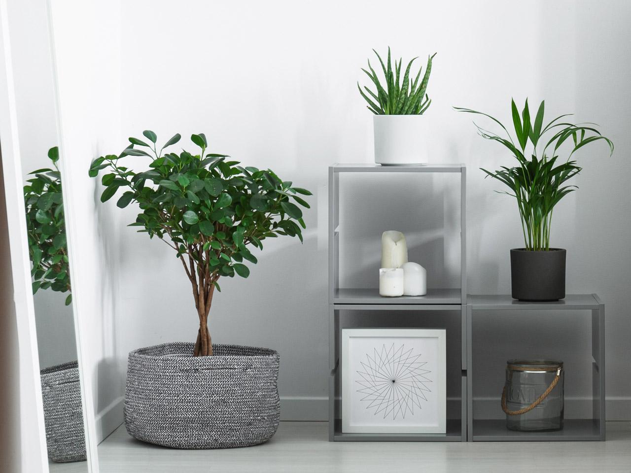 Kleine Badezimmer Pflanzen