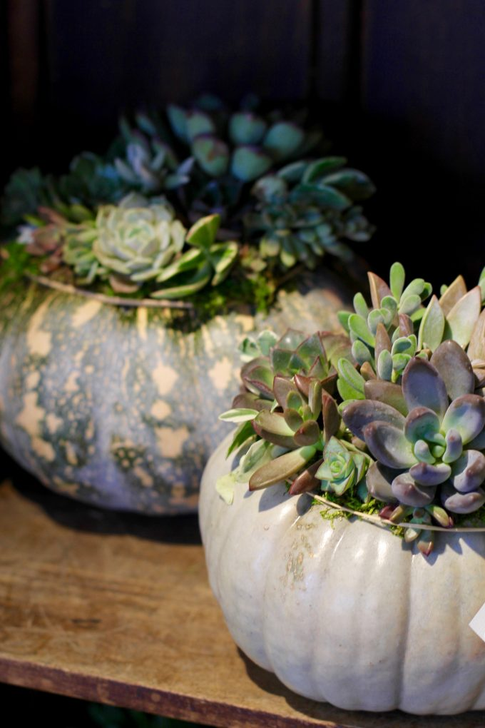 Restaurant Design Fall Succulent Topped Pumpkin Centerpieces