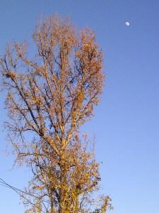 Burbank-20120104-00281