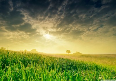 summer_field_in_the_morning-wallpaper-1280×800