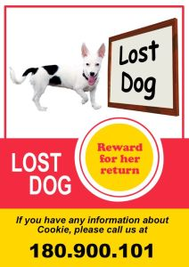 Lost Dog Flyer Template-1