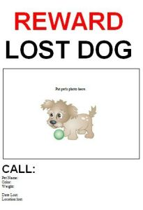 Lost Dog Flyer Template-12