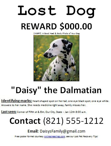 lost dog flyer example - Peopledavidjoel - Lost Dog Flyer Examples