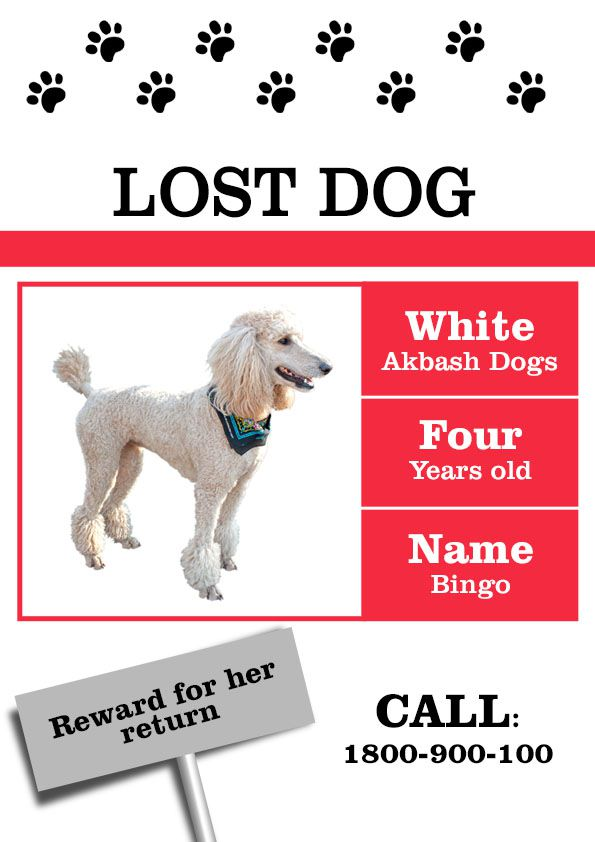 lost dog template - Romeolandinez - lost dog flyer template