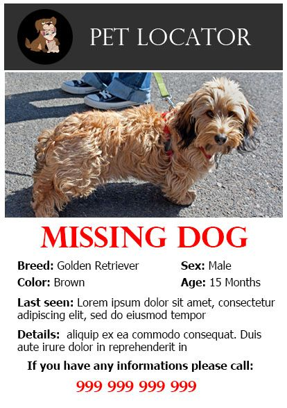20 Best Lost Dog Flyer Templates - Demplates