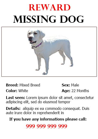 missing dog flyer example - Militarybralicious - missing flyer template
