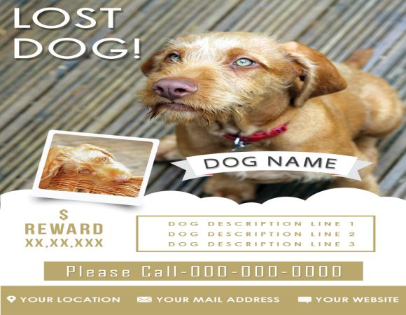 Found Dog Flyer 10 Best Flyers to Help finding Lost Dogs - Demplates