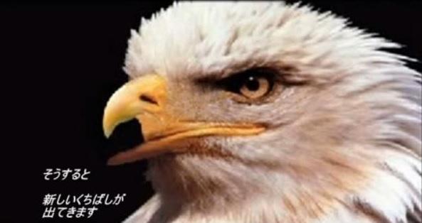 20140719鷹の選択