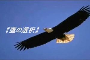 鷹の選択20140929