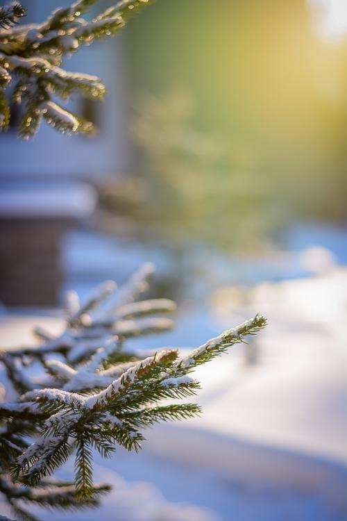 Borovetz-Snow-Time-Fun-Time-Mountain-Holiday-Denina-Martin-2
