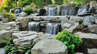 Water Features   Take Root with Dennis' 7 Dees