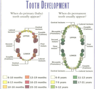 Dentalogy Dental Care - Gigi Anak 19