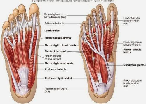 short foot exercise - Recent Blog Posts - Beaverton Sports