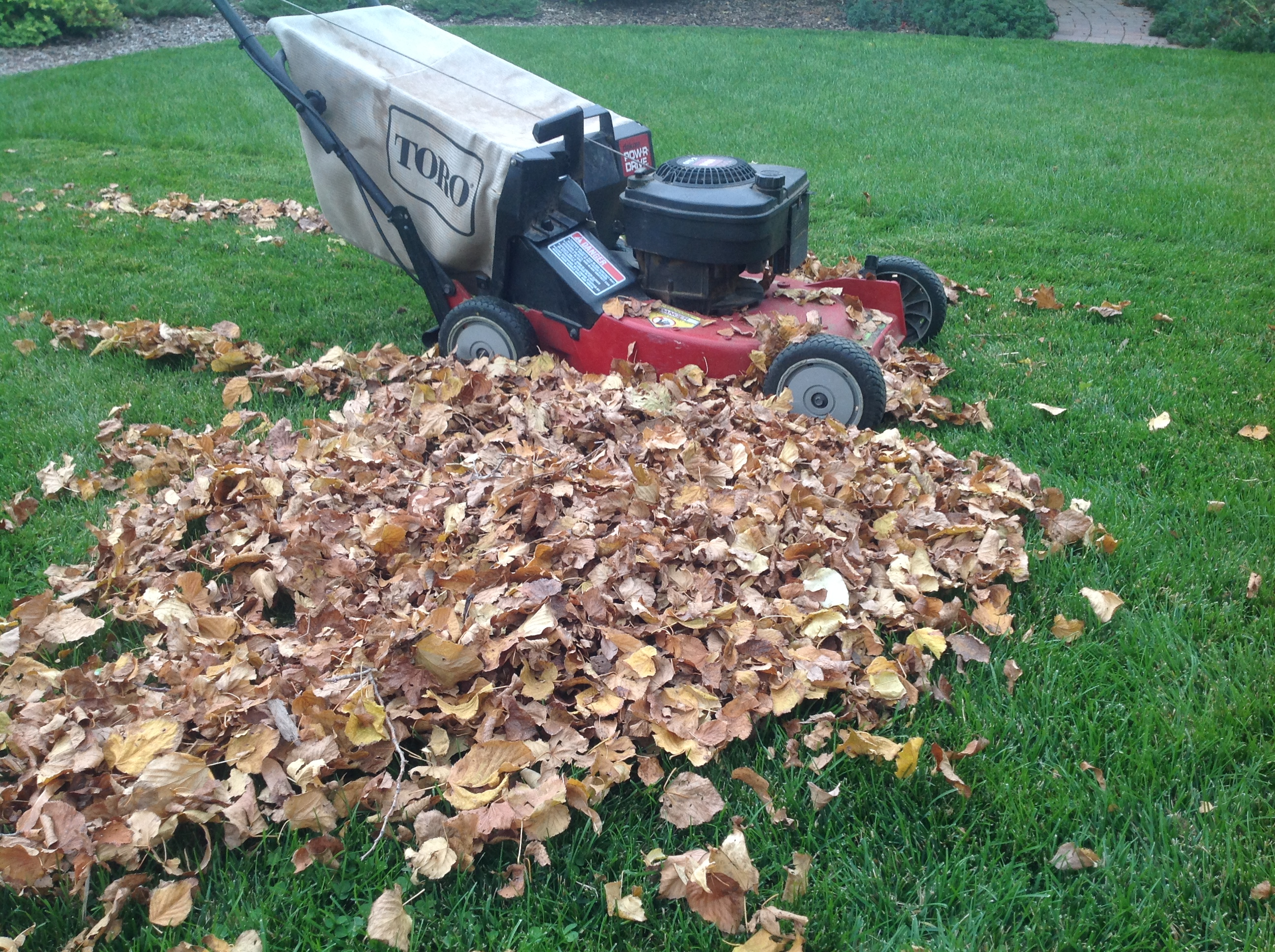 Garden Trees Punch List Fall Tips For Preparing Your Garden Trees And Lawn