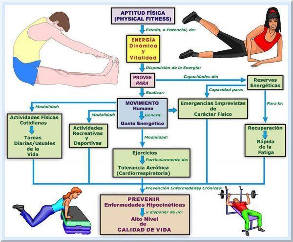 Componentes de la Aptitud Física ¡Mejora tu Calidad de Vida!