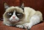 Wären die ganzen Haare nicht, man könnte Grumpy Cat glatt mit Angela Merkel verwechseln.   Bild: AP Nestle Purina PetCare