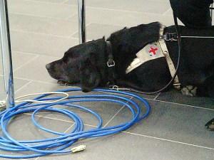 Soll helfen: Blindenhund mit Ethernetanschluss.