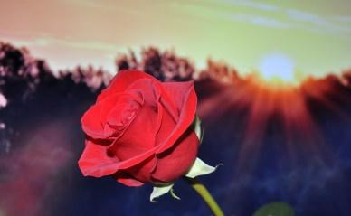 Schon Konfuzius wusste: Zu erst die Hand an die Rose, dann an die Hose.