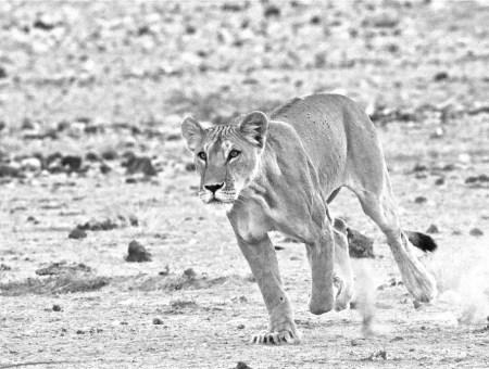 Samburu and Buffalo Springs