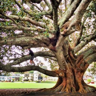 Art of Adventure Derek Loudermilk New Zealand North Island Giant Tree Auckland