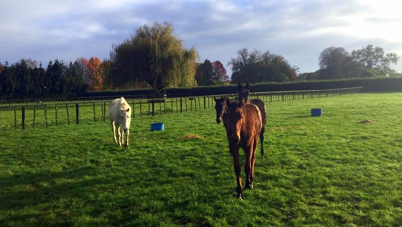 Art of Adventure Derek Loudermilk New Zealand North Island Race Horse Stables