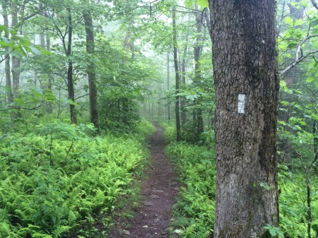 Blazes On The Appalachian Trail