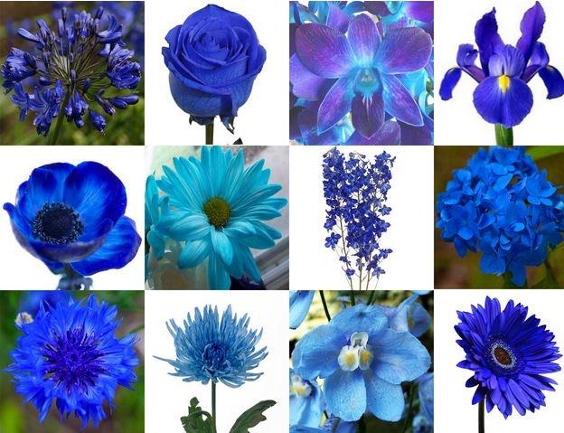 Des Moines Purple Flowers + Des Moines Purple Flowers For Sale