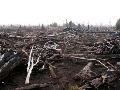 Incêndios contínuos nos dois últimos meses causam desastre ecológico na Indonésia